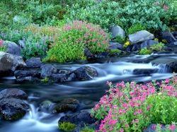 Creation paradise