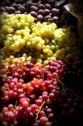 Growing Grapes - How to Grow Large & Juicy Grapes Year After Year