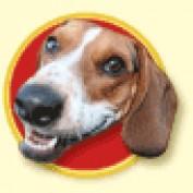 zigpop lm profile image