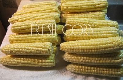 Corn Fresh Off the Stalks