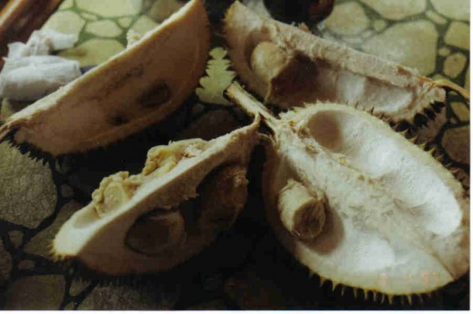 national fruit of davao, Durian fruit