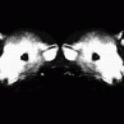 Rathugger profile image