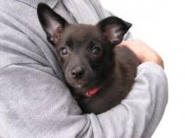 Puppy being Hugged
