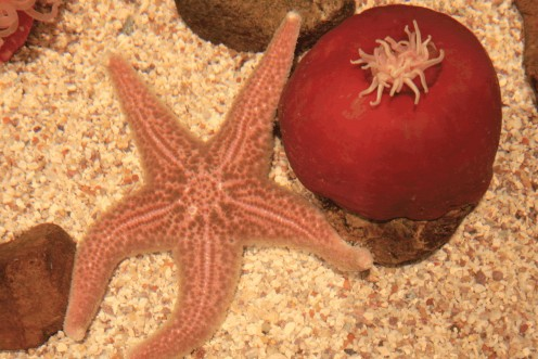 Star Fish & Sea Urchin