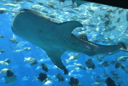 Aquatic life in Sea