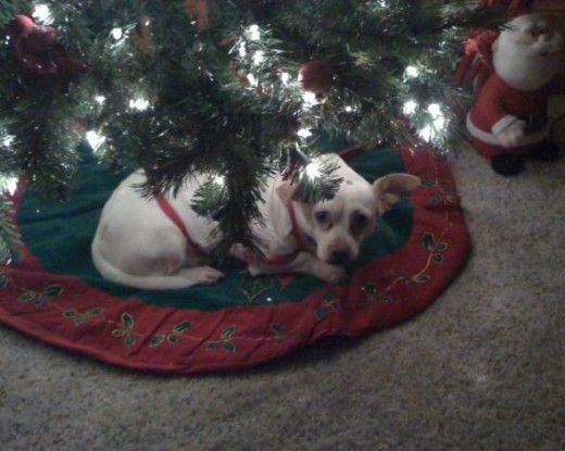 Waiting for Santa ... he says he was good all year ... ha ha ha!