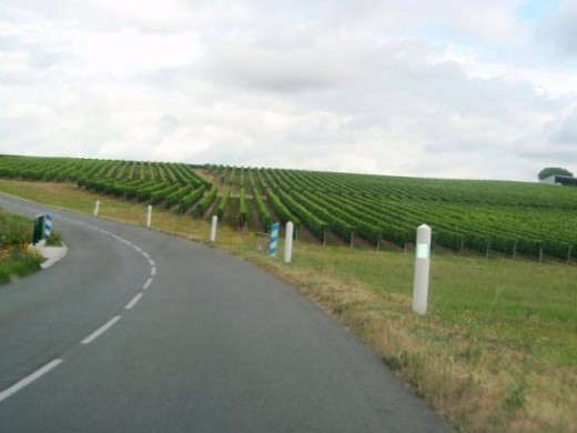 Miles and miles of vineyards around the Aquitaine region