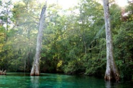 Ponce de Leon Springs flowing into Sandy Creek.   Water age testings performed by Florida State officials have determined that the water is approximately 42 hours old when it emerges from the double vortex.