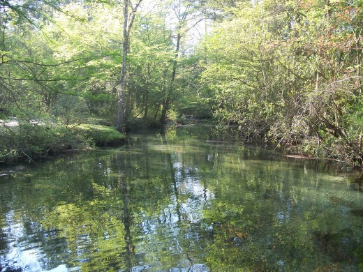 Ponce De Leon Springs flowing into Sandy Creek.      credit:  Florida State Tourism Guide