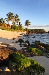 desert, deserted island, palm trees, beach, rocks, songs, music