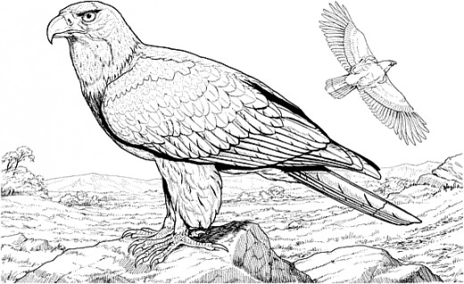 404 squidoo page not found for Birds of prey coloring pages