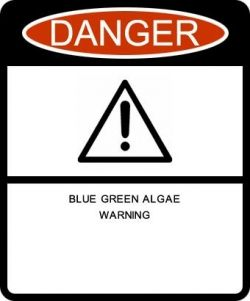 Blue Green Algae can be dangerous, make sure you stay up to date on bloom information!