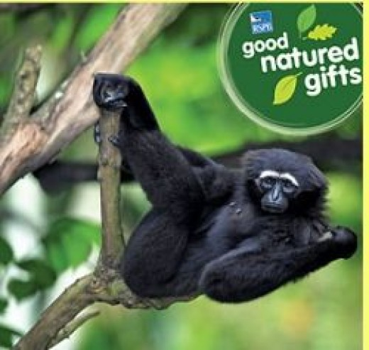 Buy Rainforest With RSPB
