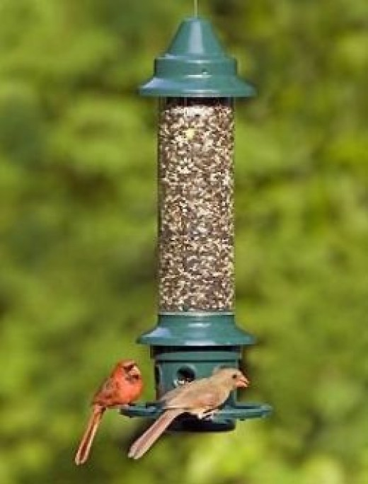 Brome 1024 Squirrel Buster Plus Wild Bird Feeder with Cardinal Perch Ring