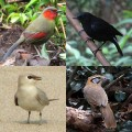 Birdwatching in Thailand - My Favorite Birds