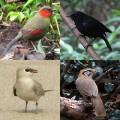 Birdwatching in Thailand - My Favorite Birds