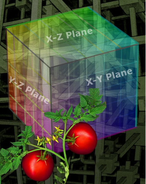 Photo derived by Robert Kernodle, symbolizing enhanced support for tomato plants.