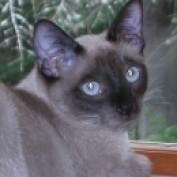 qqq0104 lm profile image