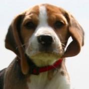 BeagleSmile profile image