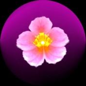 magna7 profile image