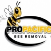 propacificbee profile image