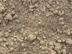 This is an example of poor soil