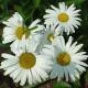 landocheese lm profile image
