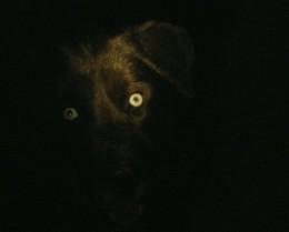 According to Lakota,Shunka Sapa, is the name of the big black dog who watches the old woman. I only heard of  Shunka Sapa after the dream.