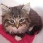 Catkin profile image