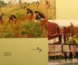 Hainan ethnic minorities - making a living