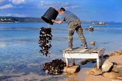 Composting in the ocean