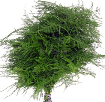This is a very delicate, textured fern, called plumosa by some, asparagus fern by others. Its adds a delightful airy almost ethereal feel to any wedding bouquet.