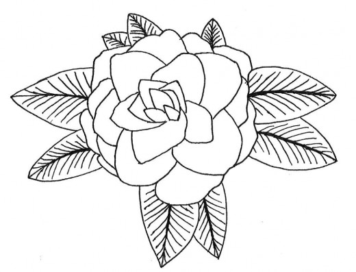 Camellia Flower Line Drawing : Alabama coloring pages