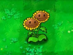 Twin Sunflower