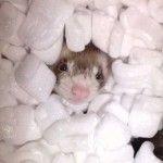 Slinky - My Ferret