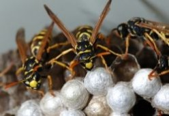 How to kill wasps with water and soap