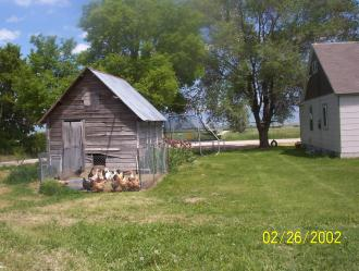 A real hen house