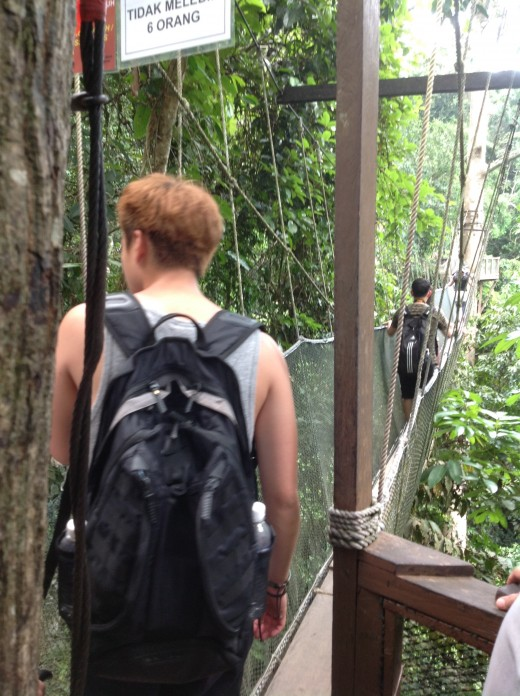 Way to go: A view of one of the Canopy bridges. Each bridge can only sustain the weight of 6 adults at a time.