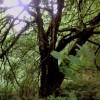 capebretonflynn profile image