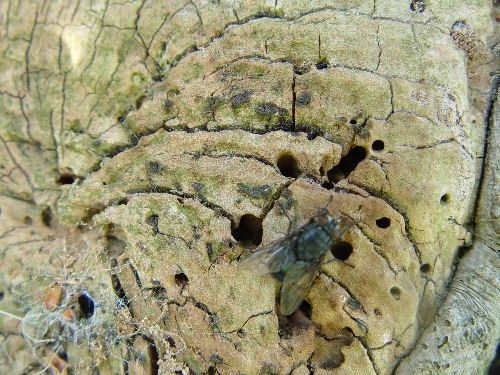 Tree stumps for insects