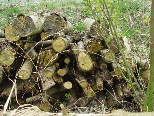 Stacks of wood for mice and other creatures