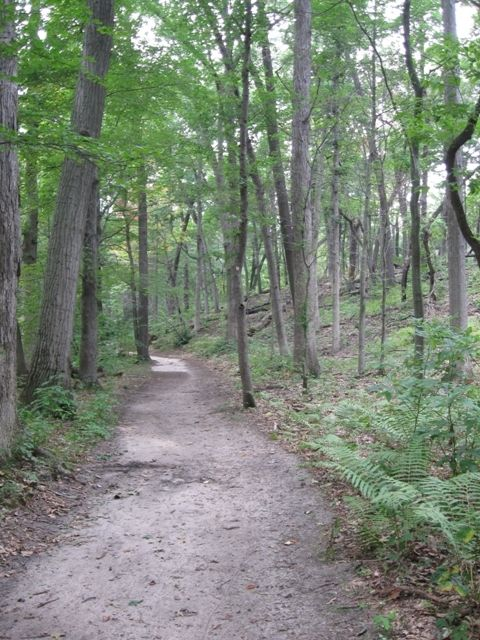 A portion of Trail 10 near the marsh.