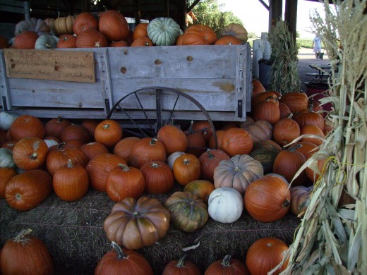 A cart overflowing with the Autumn pumpkin harvest