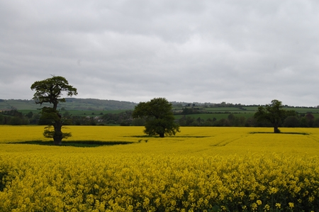 Spotted this field on the way to Symonds Yat and got lucky with the rape seed flowers