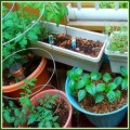 Creating A Miniature Vegetable Garden