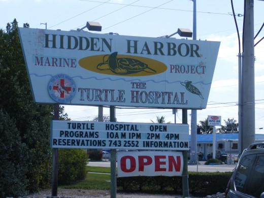 The Turtle Hospital currently resides in an old building that was previously a bar.  Another section was a roadside motel.