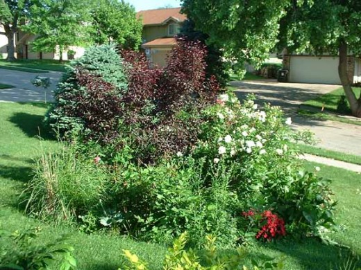My favorite garden at my old home. We took out a Cottonwood that blew over in a storm. I planted a Cisterna Plum tree, several tea roses, tons of spring bulbs, Iris, Baby's Breath and lots of other perennials. It was my pride and joy.