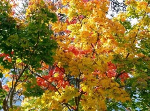 Fine Fall Foliage