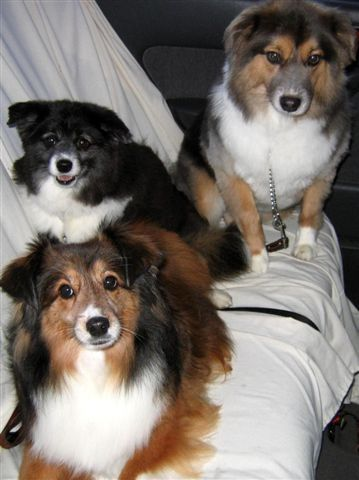 Our Minnie Rosebud, Miss Twiggie & Bella Blue just got back from the groomer.  Don't they look cute!