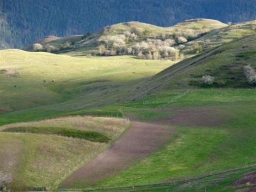 In green pastures ..